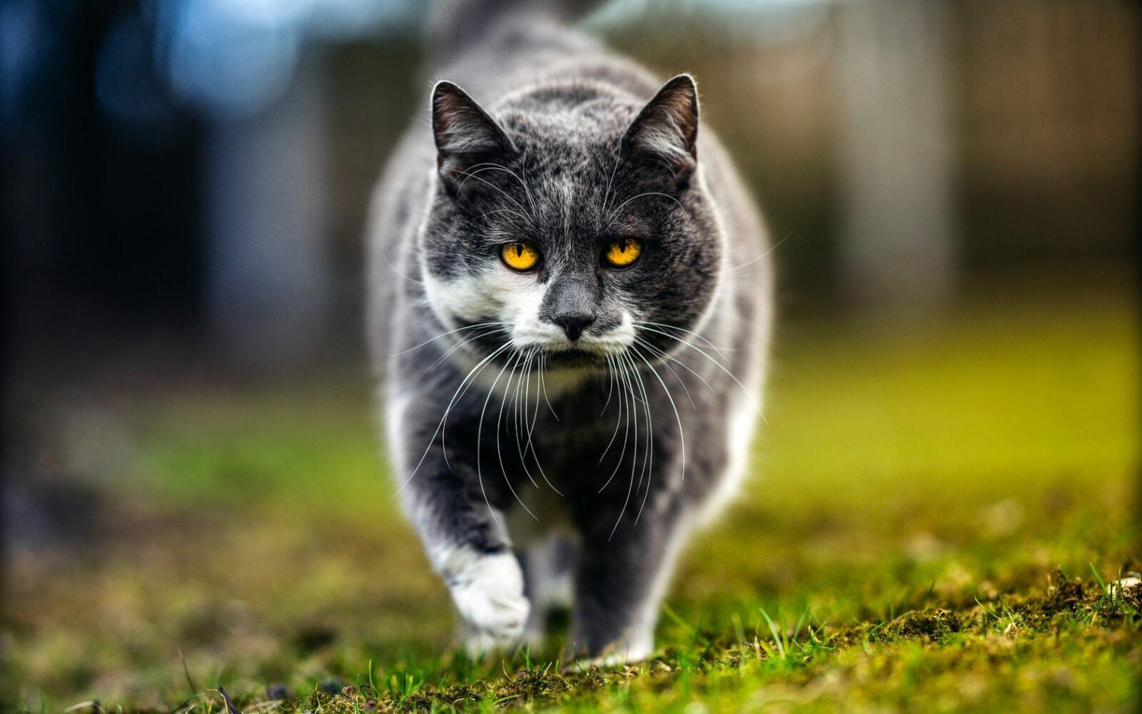 28 причин, почему стоит завести кота?