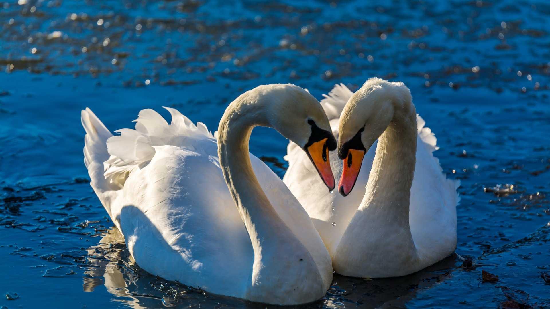 Виды любви. От древних греков и до наших дней