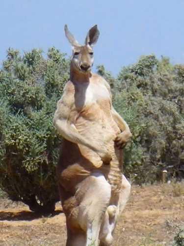 Не ходите, дети, в Австралию гулять. Многим взрослым не по себе от такой живности