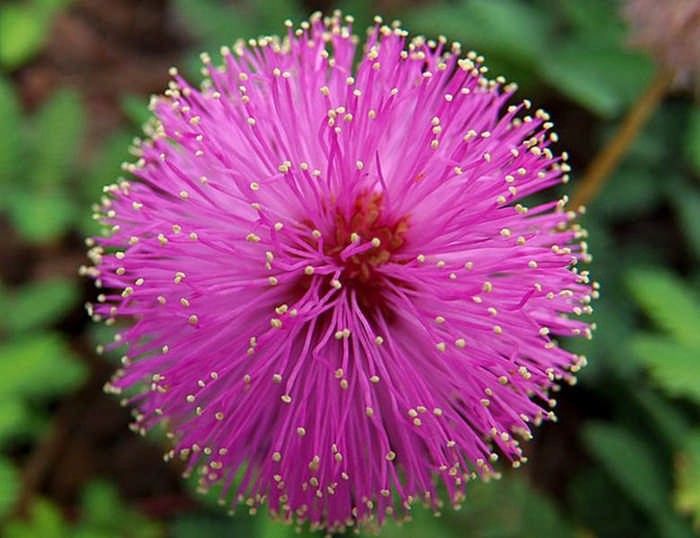 15 цветов, которые нельзя держать дома
