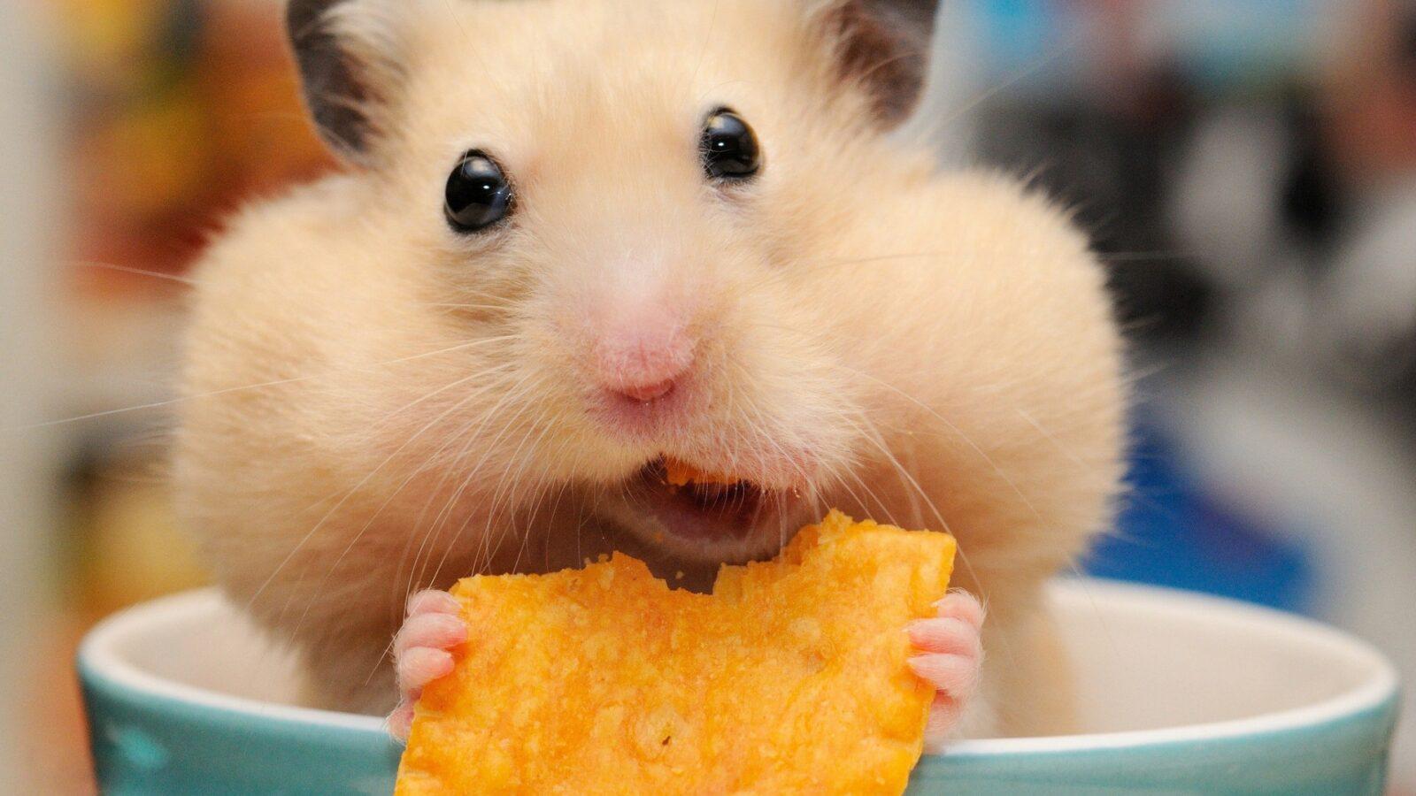 «Грустная» еда. Продукты, которые портят вам настроение