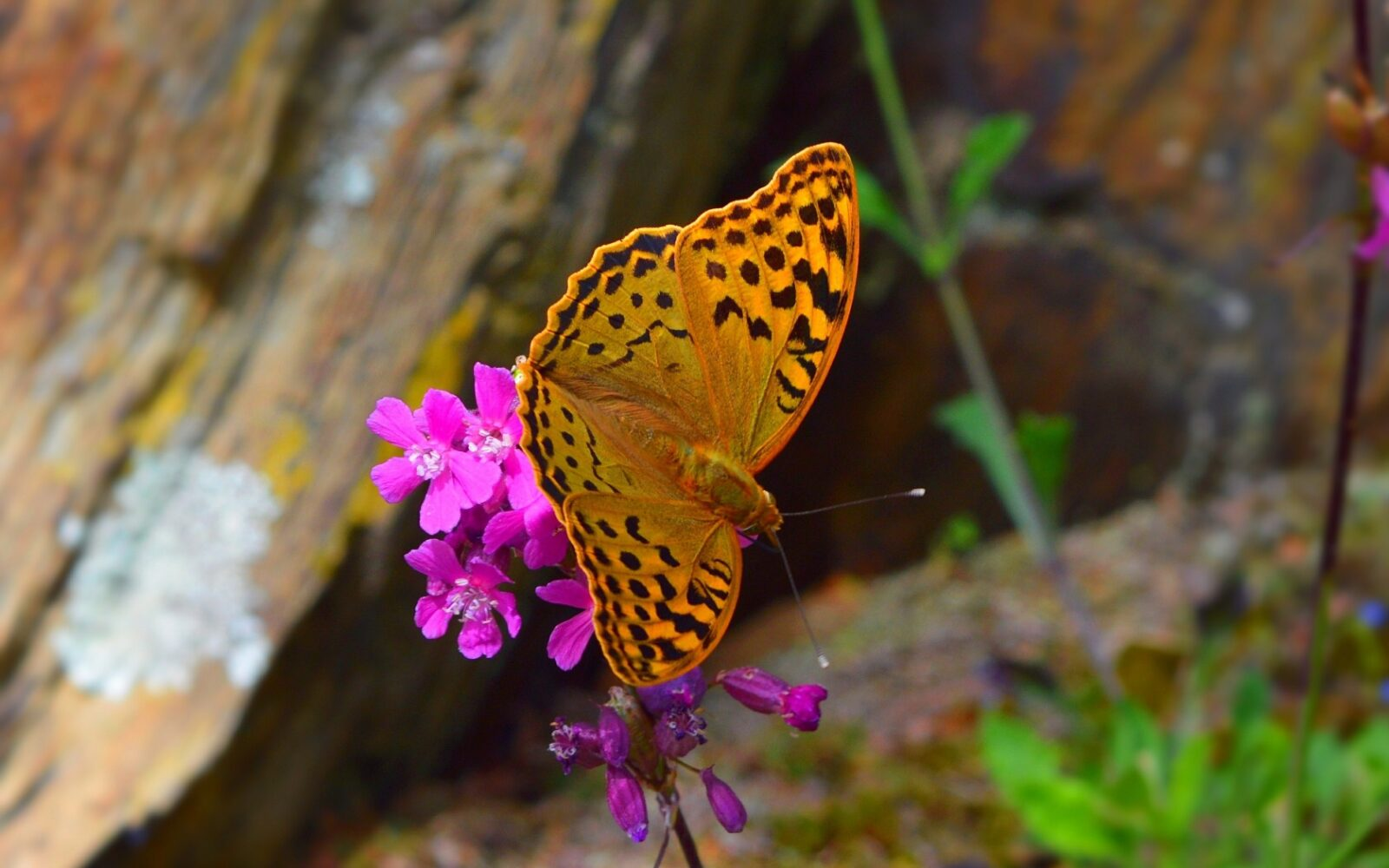Потрясающий тест! Выберите бабочку, которая вам приглянулась и узнайте тайны своей души!