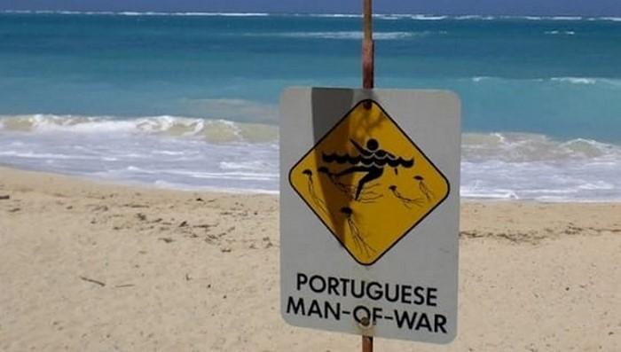 Заметишь такое на пляже — немедленно уходи оттуда или зови спасателей…