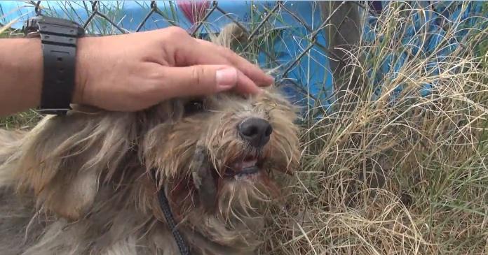 Бездомный пес преобразился, когда его подобрали с улицы и подстригли. Это стоит посмотреть!