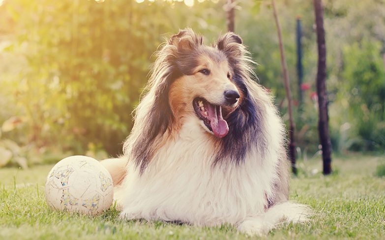 На какую собаку вы похожи по гороскопу. Всё точно!