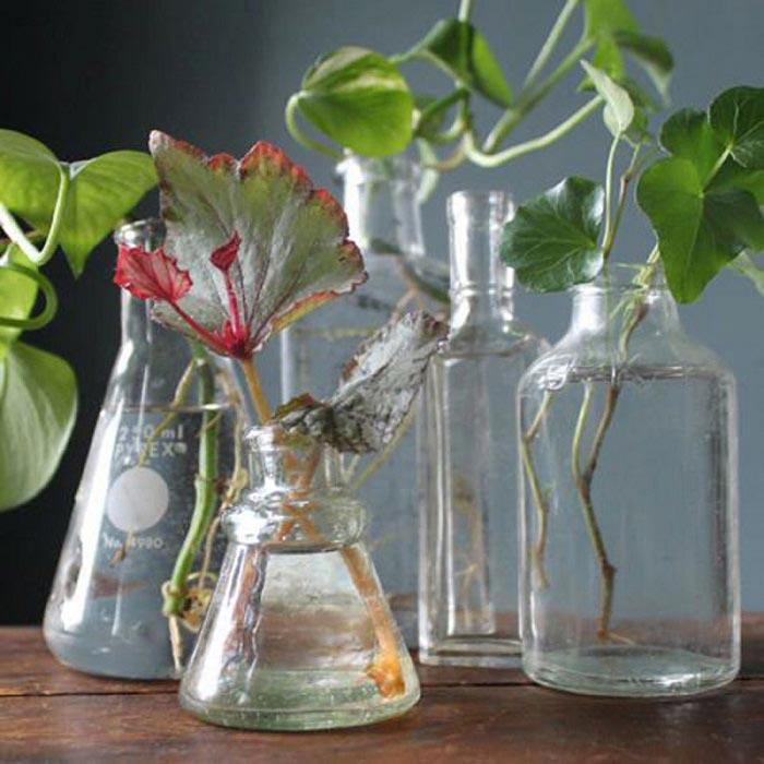 Как сделать так, чтобы ваши цветы росли и не болели?