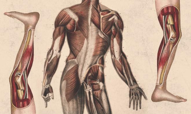 Наше здоровье ухудшается с каждым часом, проведенном в сидячем положении.