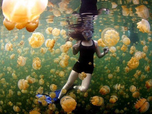 20 гениальных фото от National Geographic