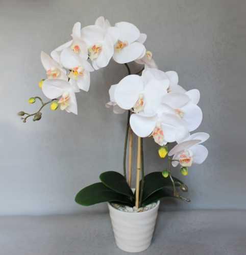 Орхидея будет цвести круглый год, если выполнять эти 9 правил