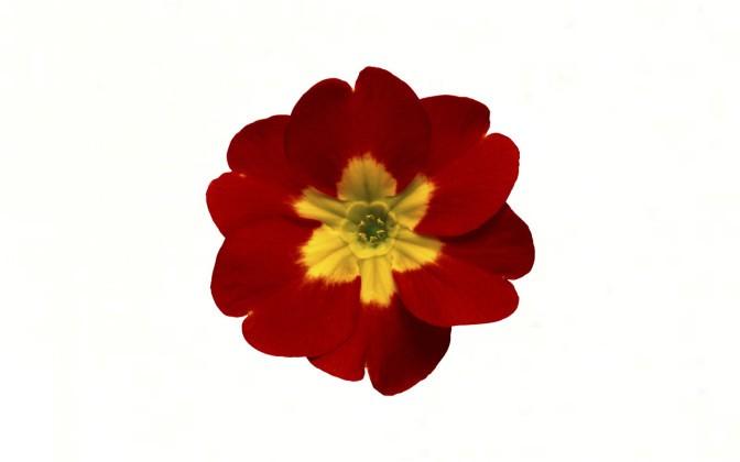 Выбери цветок и узнай секрет своей женственности