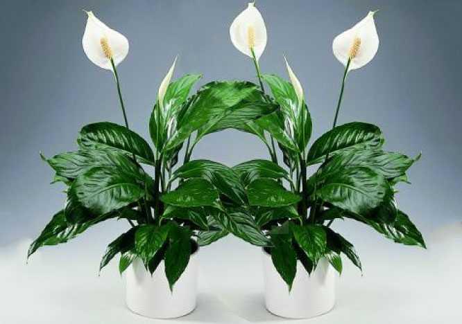 Растения, которые приносят в дом деньги и благополучие