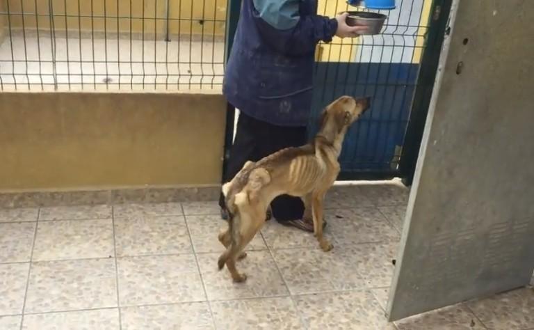 На эту собаку нельзя было смотреть без слез. Но через несколько месяцев...