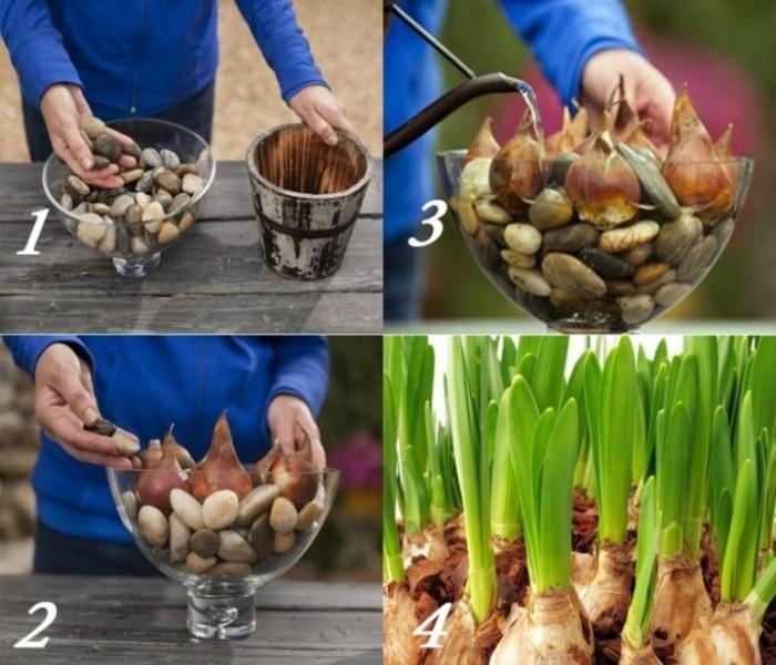 С этим уникальным секретом тюльпаны у вас будут цвести круглый год!