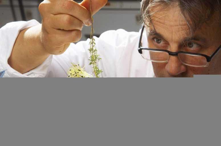 Кулинарные хитрости от шеф повара