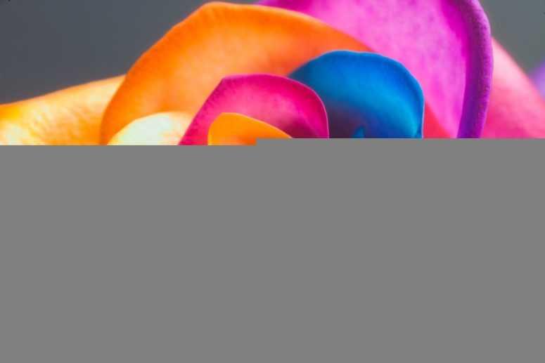 Цвет, который вам понравился подскажет правильный ответ