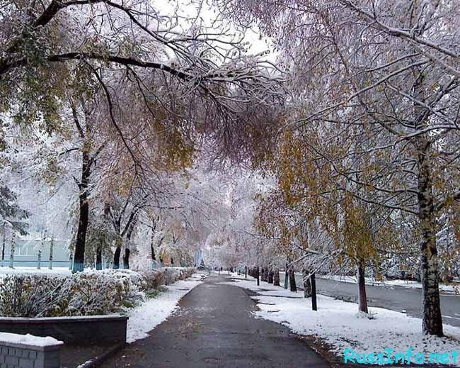 Узнайте, какой для вас будет зима! Новогоднее предсказание