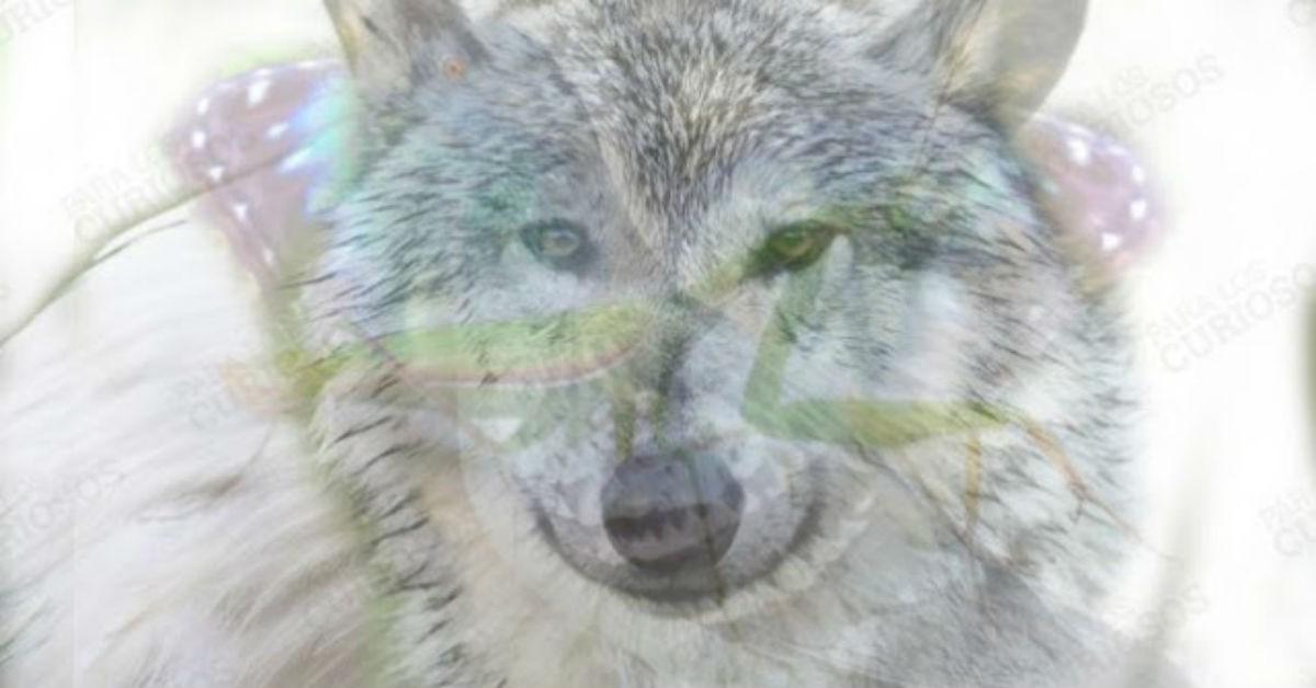 Животное, которое вы первым увидите на фото, раскроет ваш характер