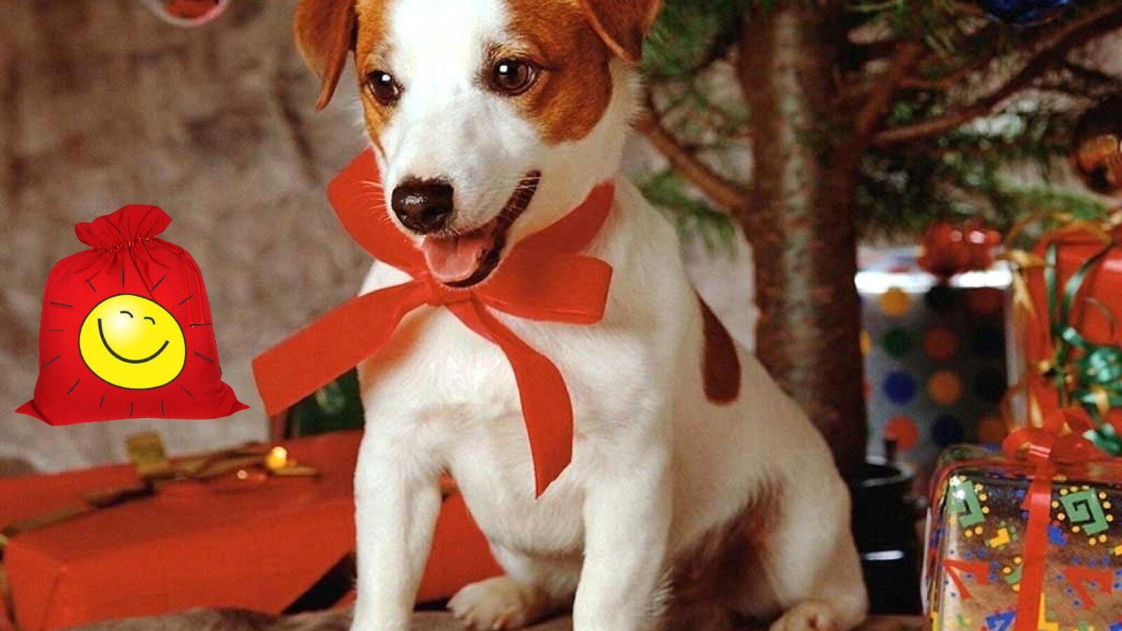 Выберите понравившуюся собачку и узнайте какая любовь ждет вас в 2018 году Желтой Собаки
