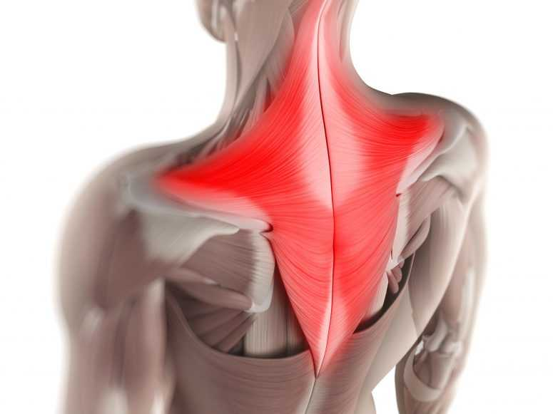 Мышечные зажимы шеи и спины