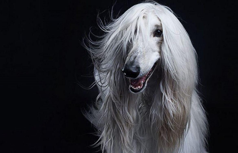 На какую породу собак Вы больше всего похожи по знаку зодиака