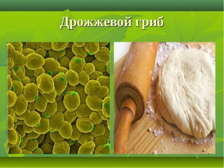 Про дрожжи: кандидат медицинских наук, врач-натуропат, Виктор Хрущев