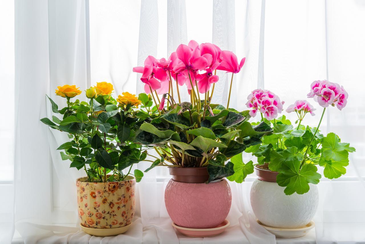 Комнатные растения, которые нельзя держать дома,