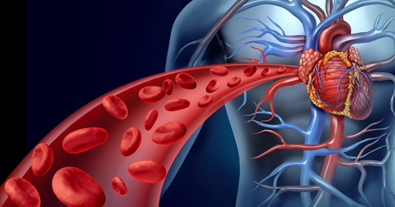 Как улучшить циркуляцию крови — элементарные способы
