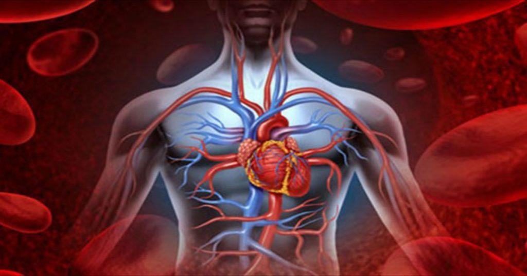 Улучшение циркуляции крови в простате