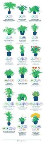 Комнатные растения, которые очищают воздух