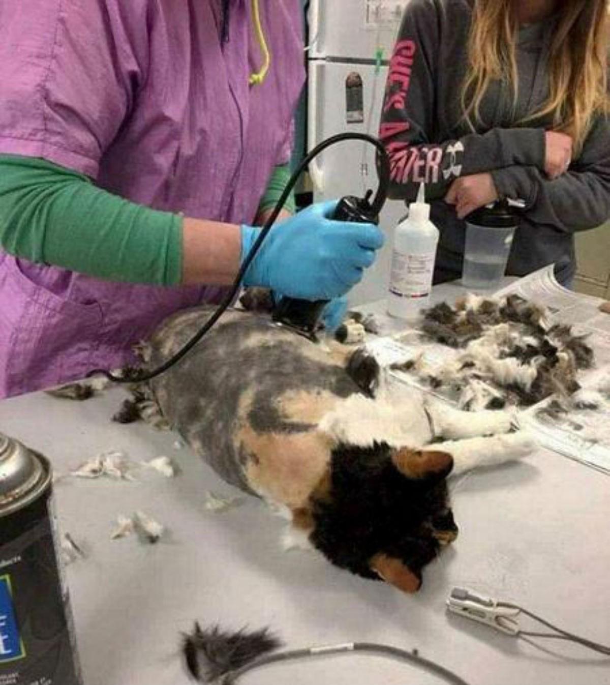 Ветеринары спасли брошенную кошку от её же гигантских дред