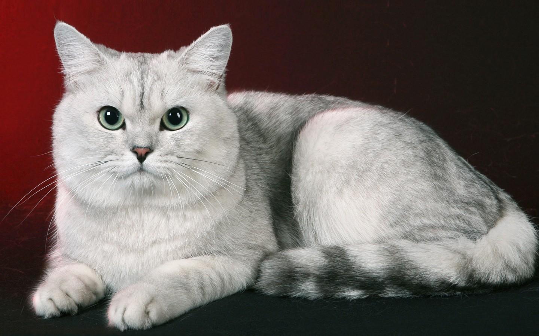 Кошка всегда указывает на присутствие негатива в доме. Вот как распознать эти знаки