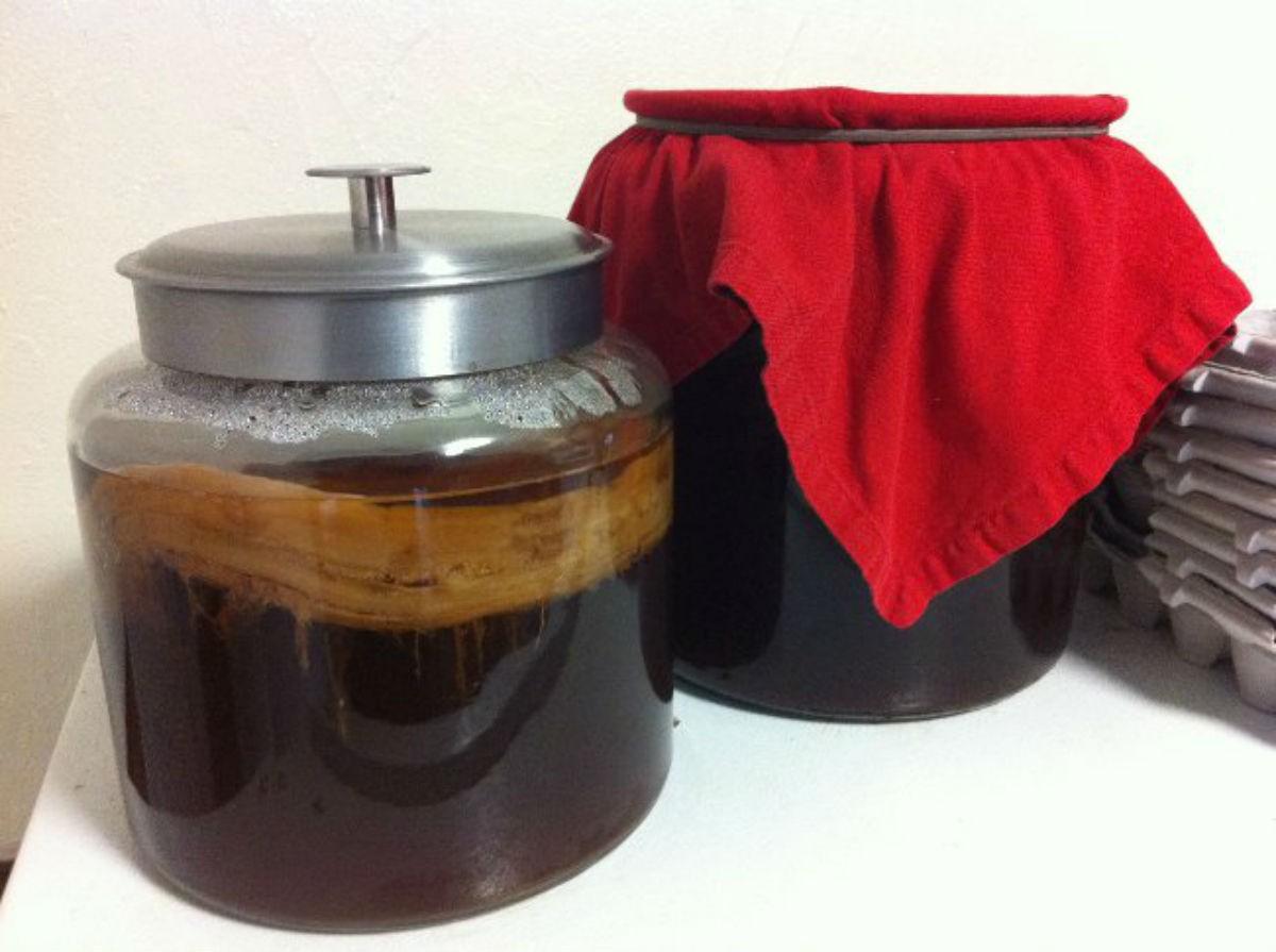 Выращиваем чайный гриб из черного чая или шиповника