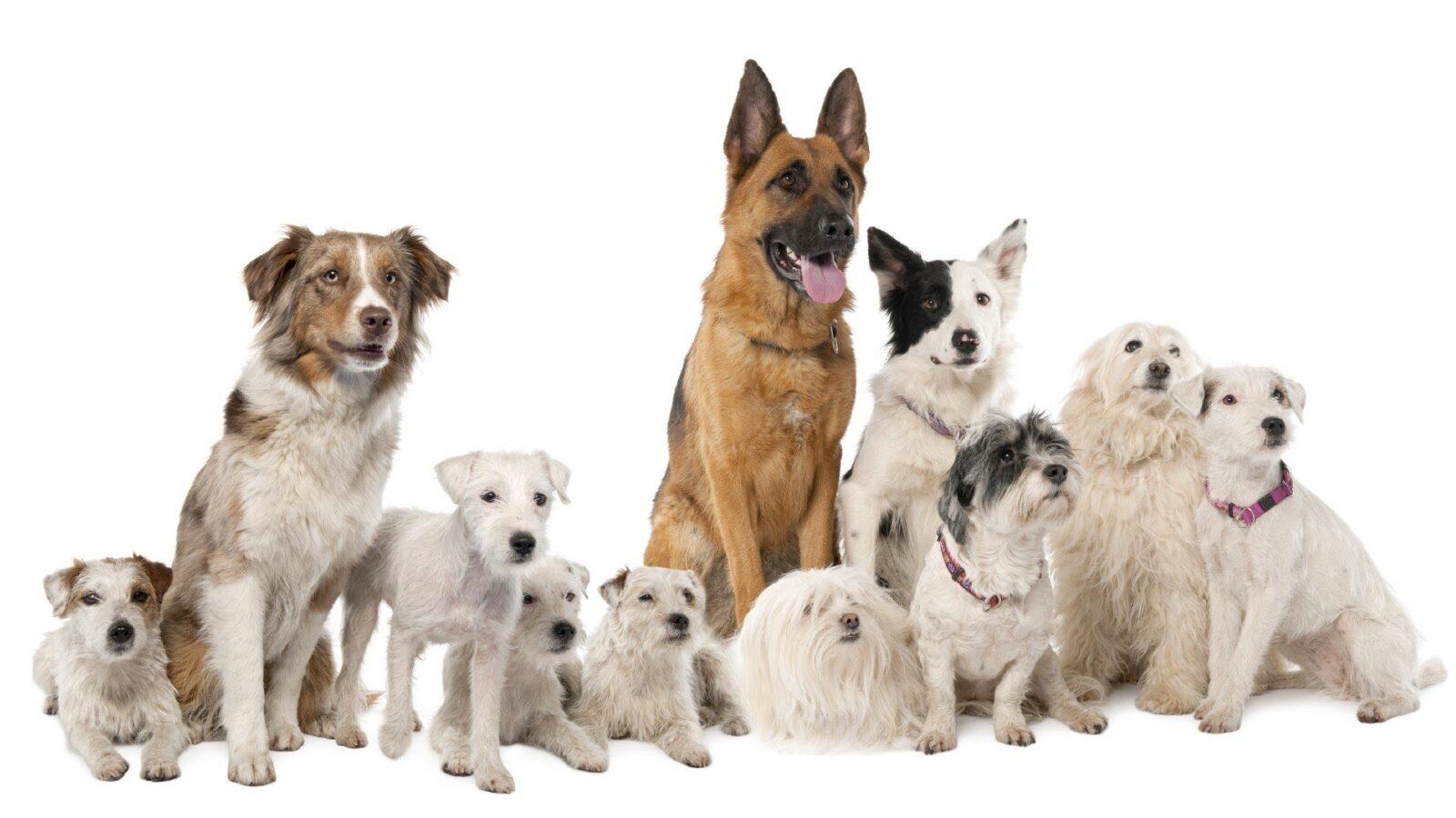 Выберите собаку этого года и узнайте новые факты о себе! Просто невероятно