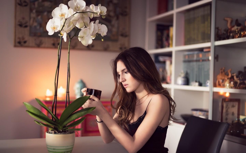Хотите, вырастить больше сотни орхидей?