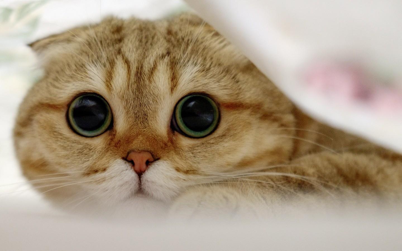 Могут ли кошки чувствовать эмоции человека?