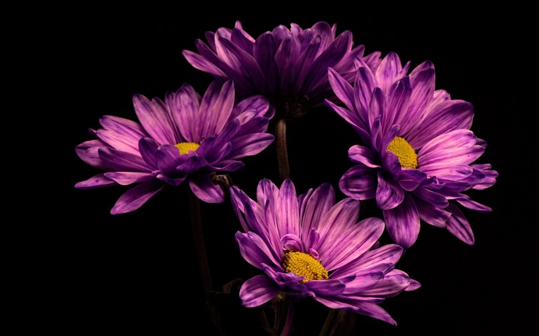 Душевное стихотворение Беллы Ахмадулиной «Она цеплялась за любовь»